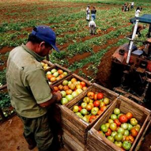 agrovenezuela (1)