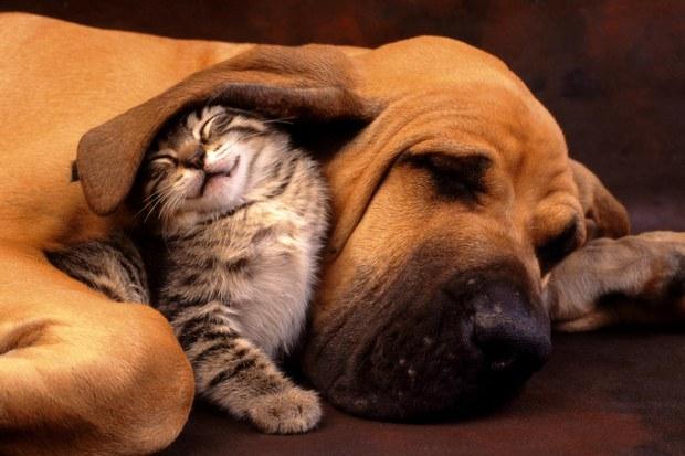 perro y gato - MippCI 1185d4756093